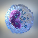 immune cells and inflammation