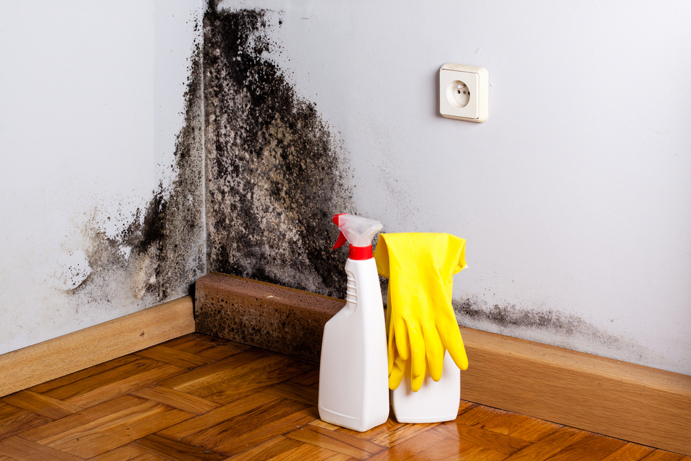 Inhalation of mold and bacteria linked to sarcoidosis.