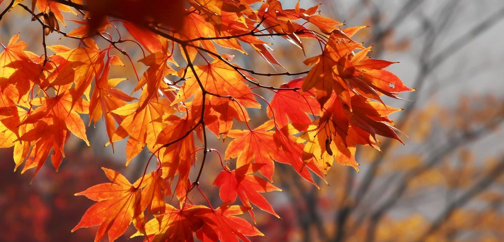 Surviving the Four Seasons with Sarcoidosis