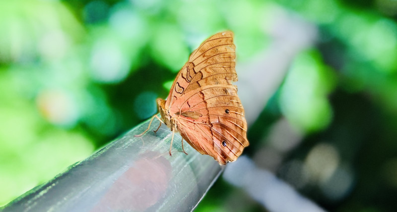 A picture of a butterfly, or as Kerry would call it, a buttahfly.